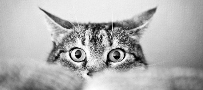 castrazione gatto