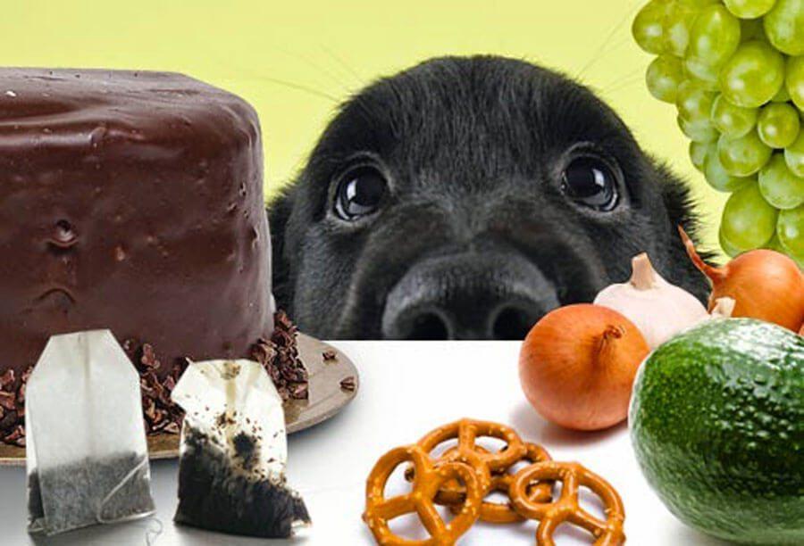 alimenti vietati ai cani