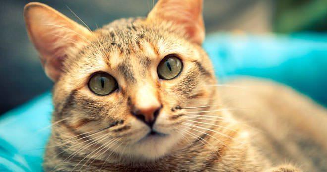 colite gatto