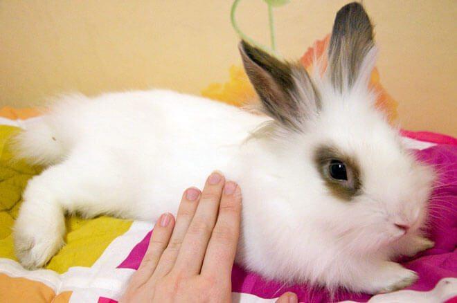 come tenere un coniglio