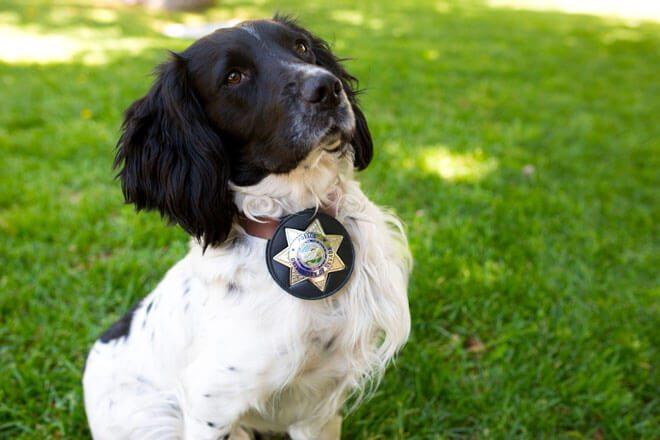 come addestrare un cane da guardia