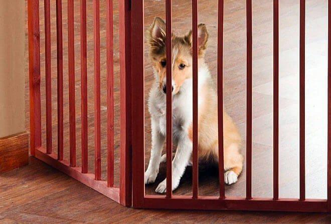 come costruire un cancelletto di legno per cani