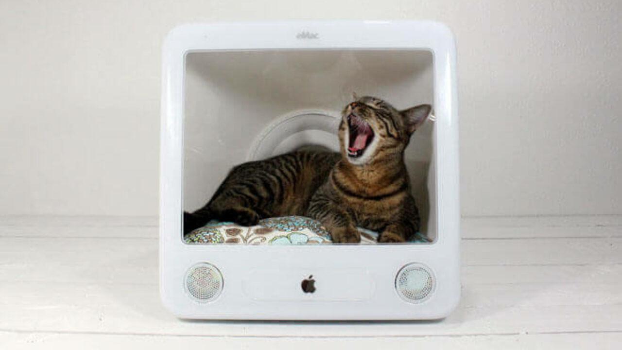Cuccia Gatto Fai Da Te come costruire una cuccia per gatti | cuccia per gatti fai