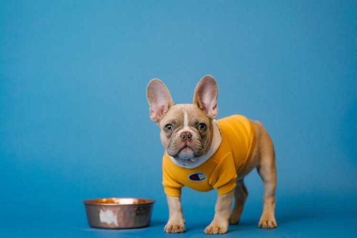 come dare da mangiare al cane