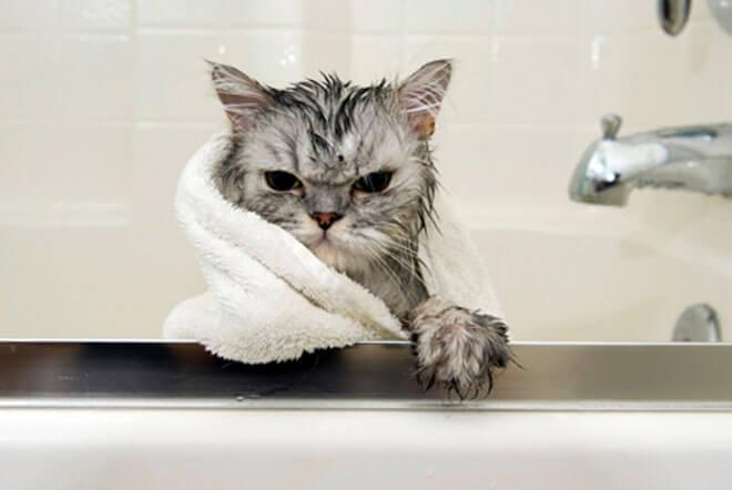 come lavare un gatto