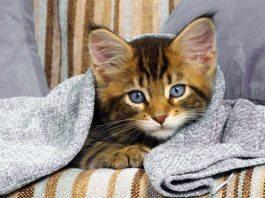 i gatti soffrono il freddo