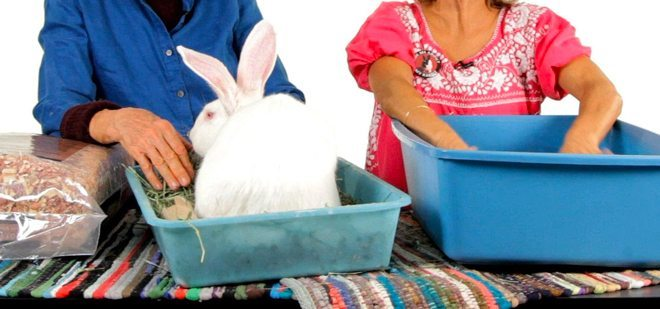 come pulire la lettiera del coniglio