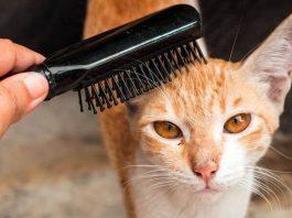 come spazzolare un gatto