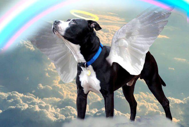 come superare la morte di un cane