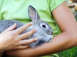 come accarezzare un coniglio