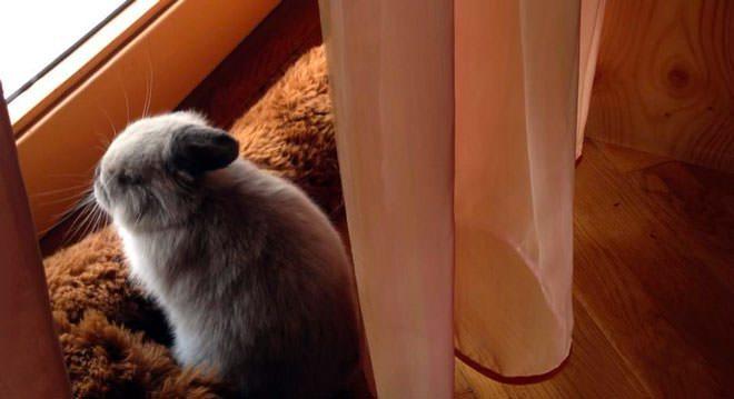 comportamento dei conigli