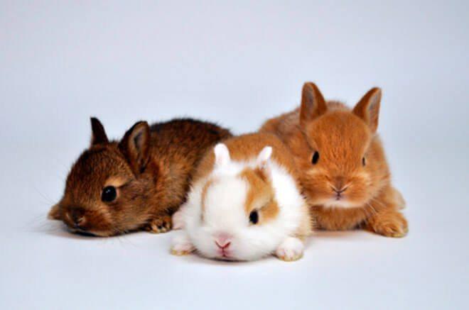 comportamento del coniglio