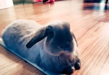 come tenere un coniglio in casa