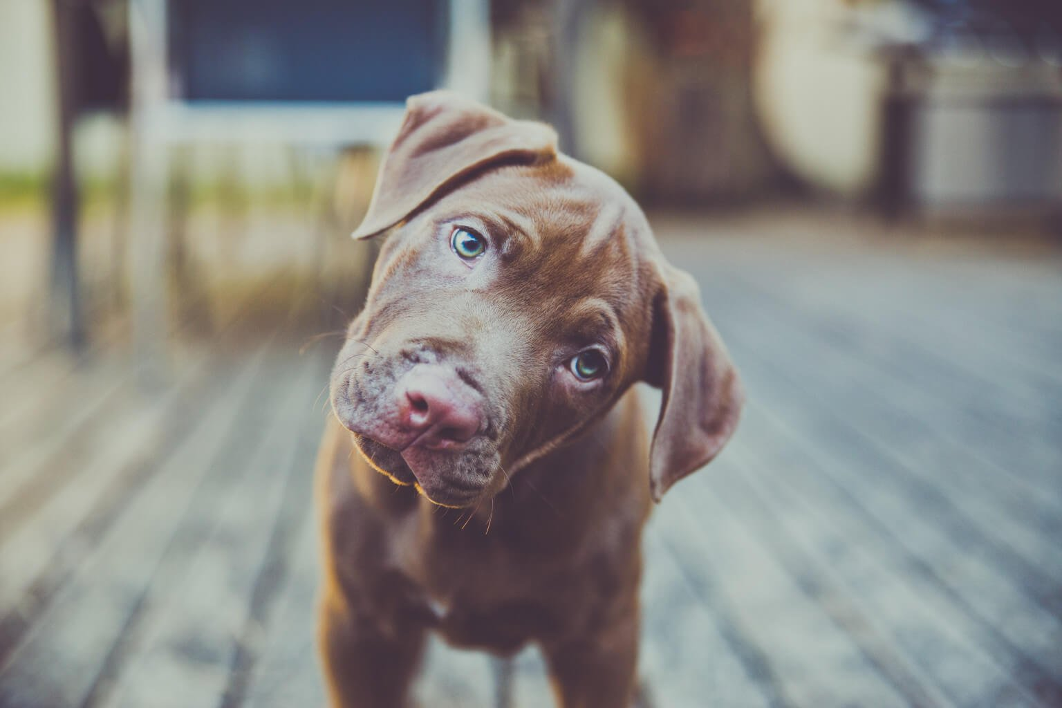 capire i comportamenti del cane