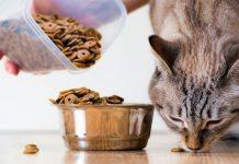 cosa mangiano i gatti