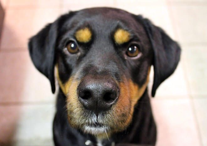 crisi epilettiche nel cane