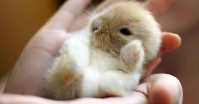 cuccioli di coniglio