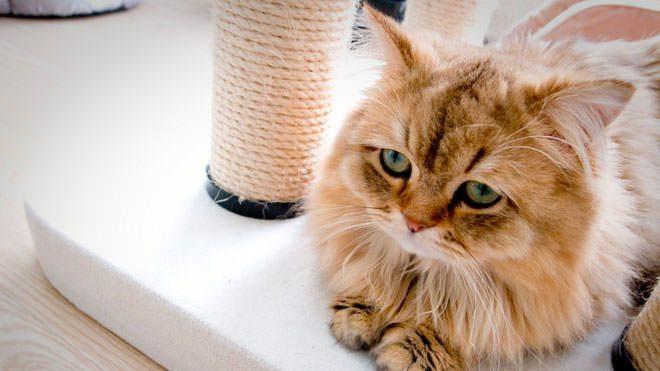 depressione gatto
