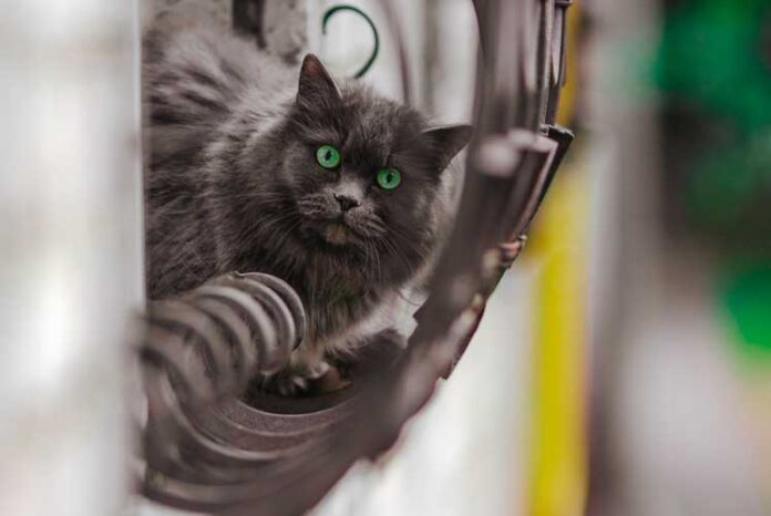 di cosa hanno paura i gatti