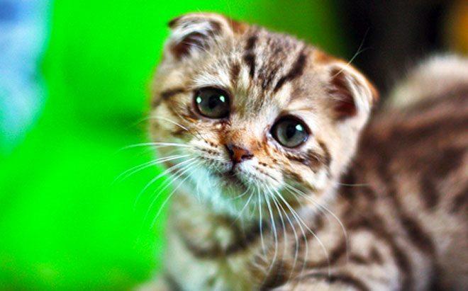 diarrea gatto rimedi