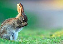 diarrea nel coniglio