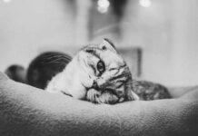 diarrea nel gatto