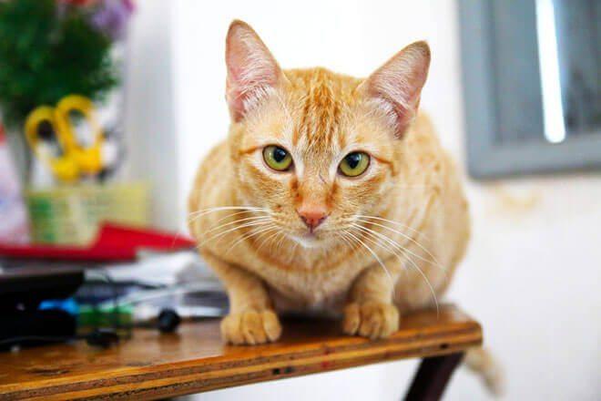 dieta per gatti con insufficienza renale
