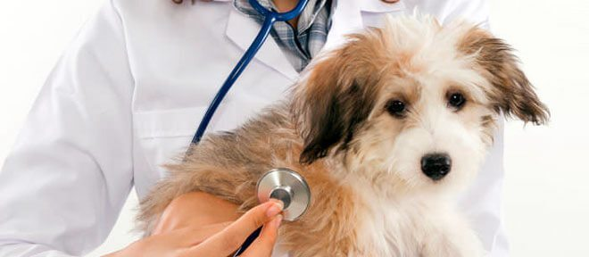 dilatazione stomaco cane