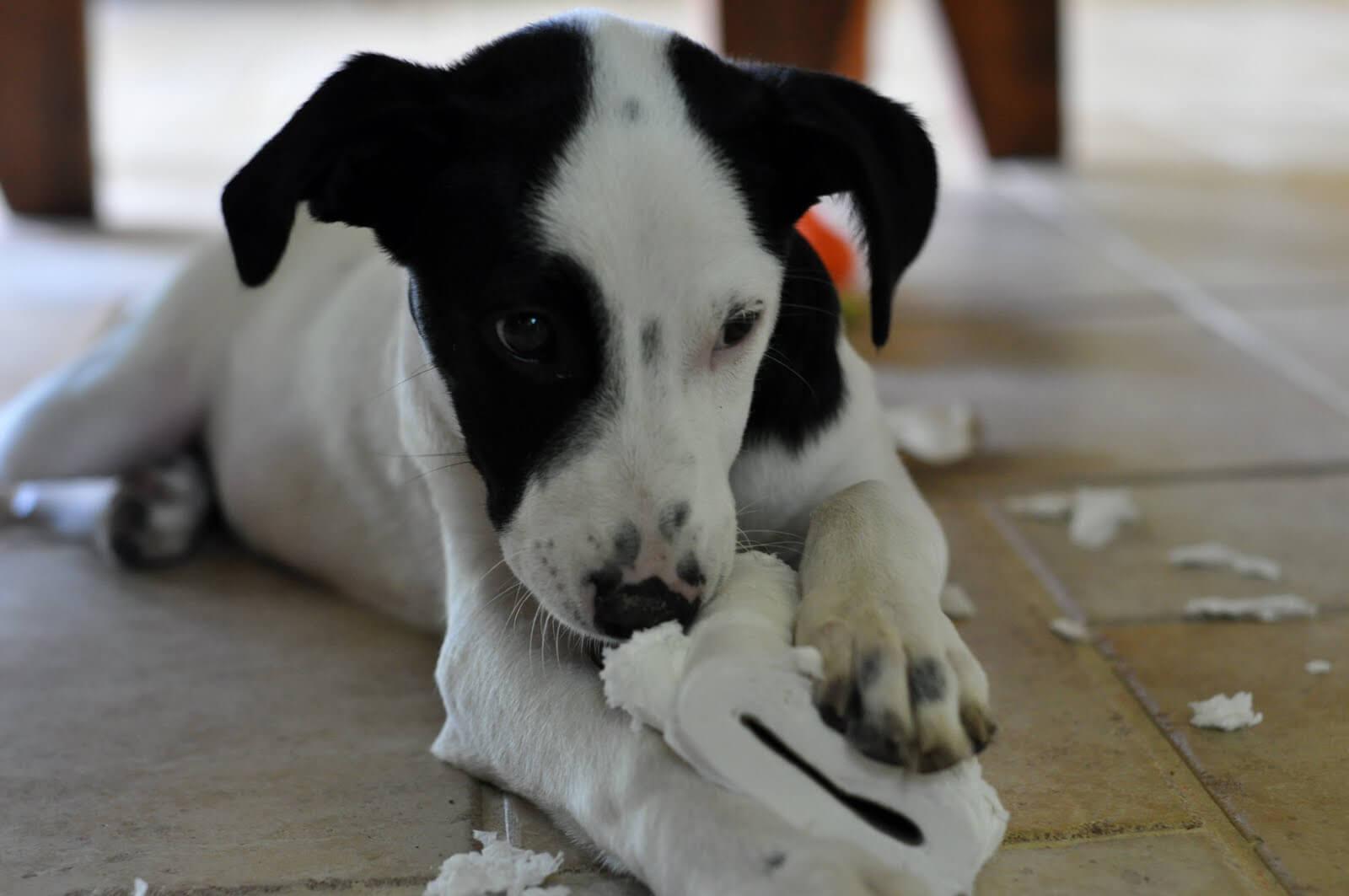cani che distruggono casa