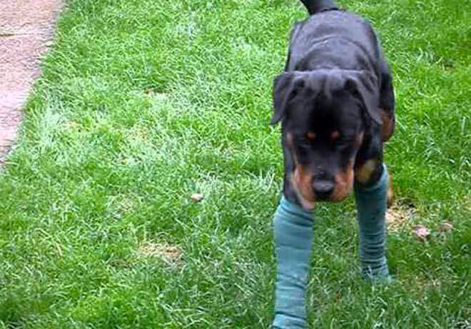 dolori articolari nei cani