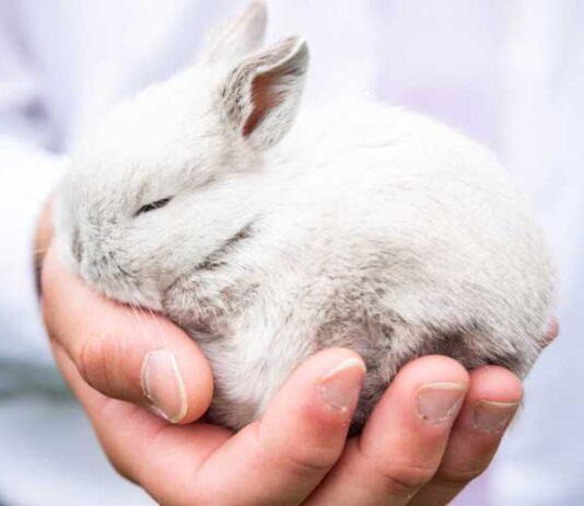 domesticazione conigli nani