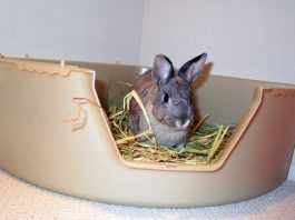 come educare un coniglio a fare i bisogni nella lettiera