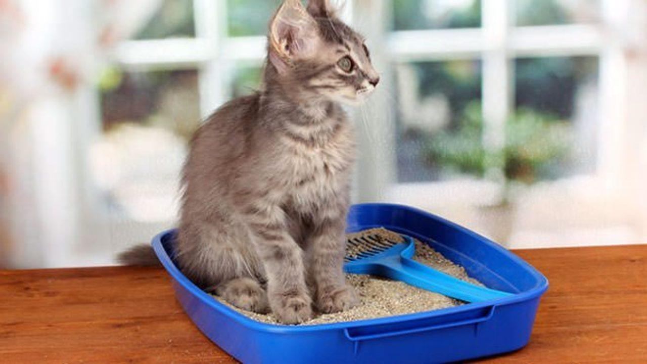 Costruire Lettiera Per Gatti come abituare il gatto alla lettiera e perchè il gatto fa i