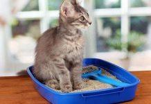 come abituare il gatto alla lettiera