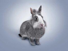 Educare un coniglio alla lettiera
