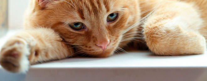 fip gatto sintomi