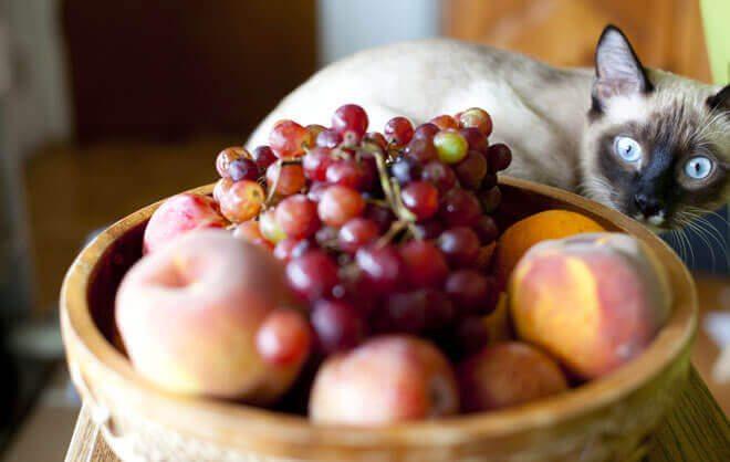 frutta ai gatti