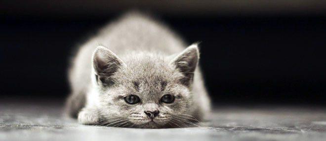 micosi del gatto sintomi
