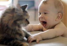 gatti e neonati