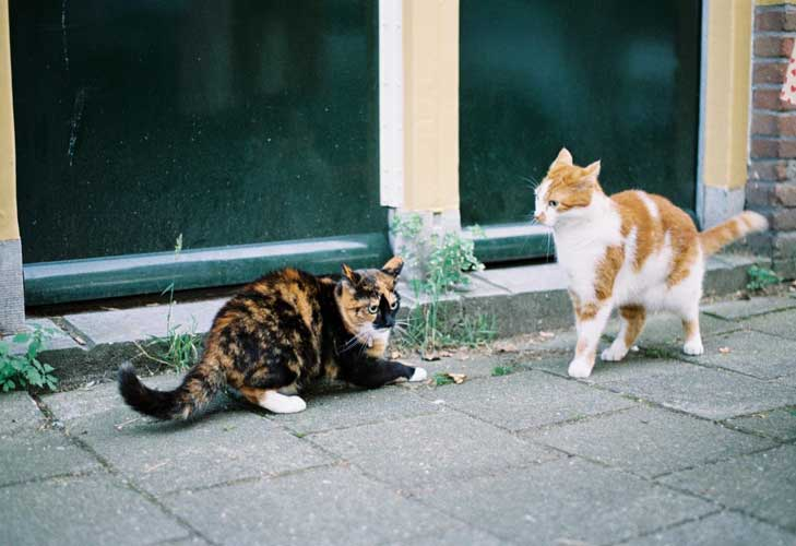 gatti che litigano cosa fare