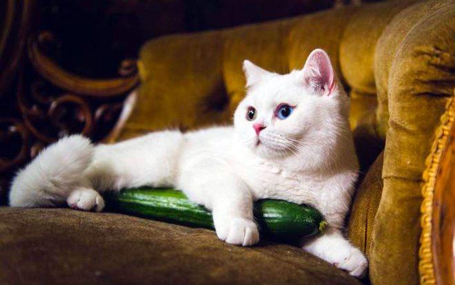 gatti e zucchine
