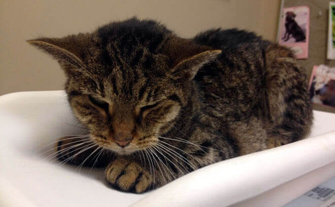 gatto con problemi renali