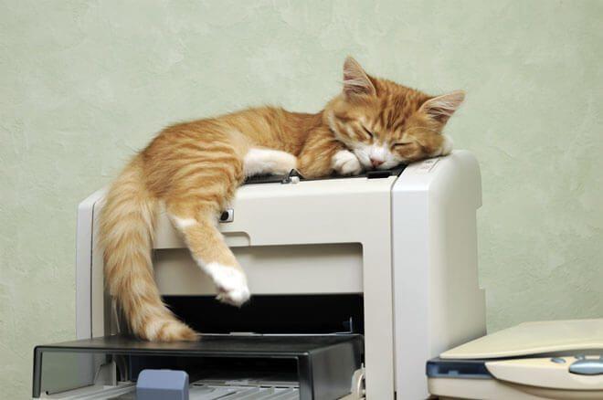 gatto in ufficio