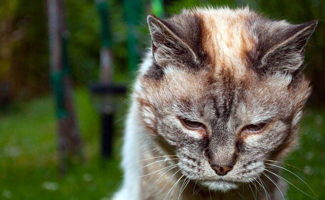 gatto vecchio