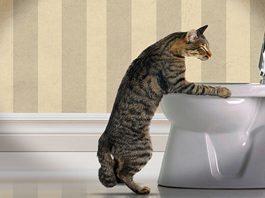 gatto vomita spesso