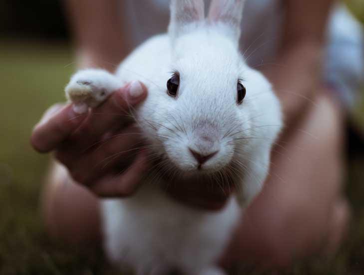 giocare con il coniglio