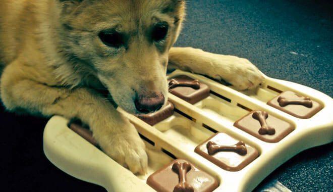 giochi attivazione mentale cane