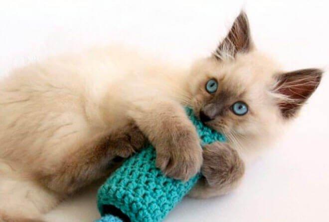 giochi fai da te per gatti intelligenti