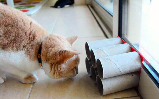 giochi fai da te per gatti