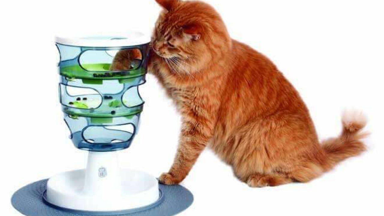 Costruire Lettiera Per Gatti giochi intelligenti per gatti e giochi per gatti